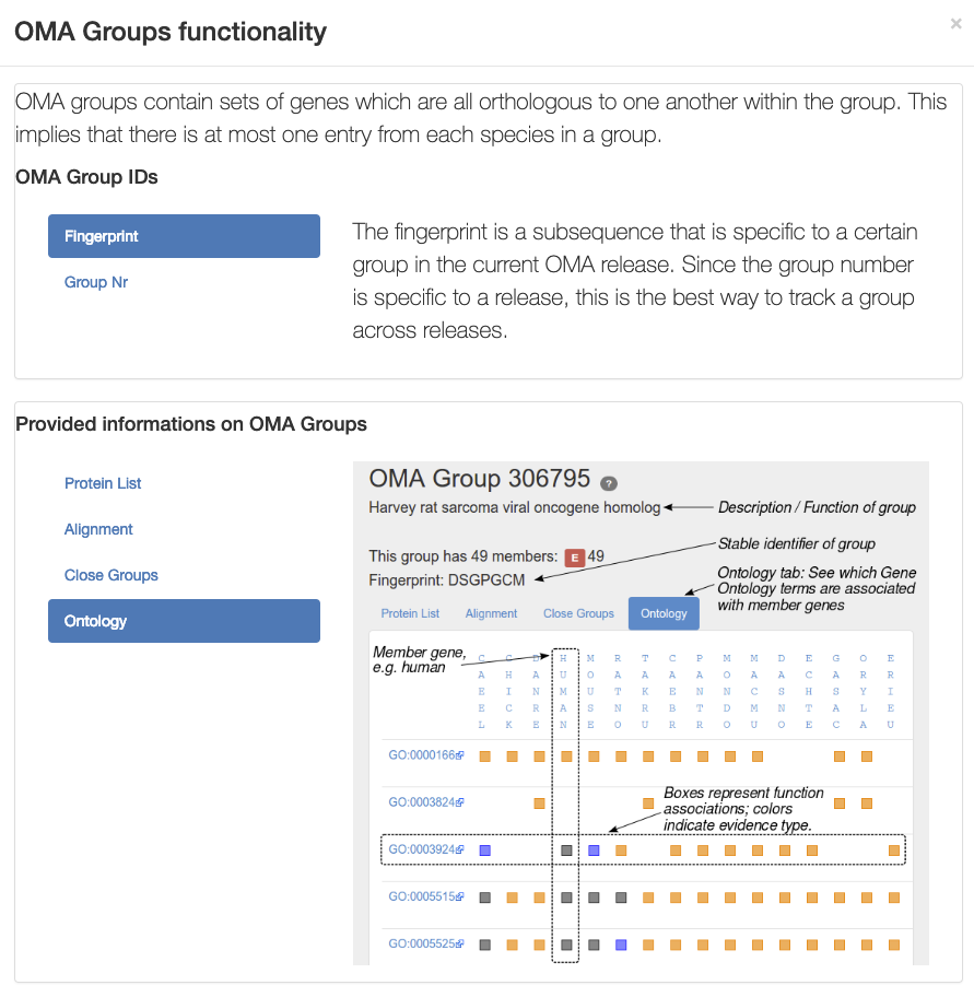 GO annotations for OMA groups
