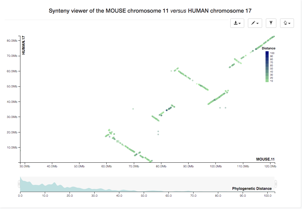 Synteny dotplot of selected chromosome pair